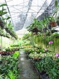 Fleurs et plante d'arbres dans la ferme d'intérieur Image stock