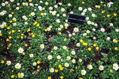 Fleurs et plante verte dans le jardin à Tokyo Japon 2017 le 31 mars 2017 Image stock
