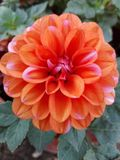 Fleurs et plantes Image stock
