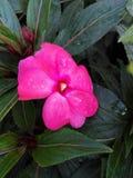 Fleurs et plantes Photo libre de droits
