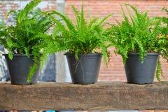 Fleurs et plantes croissantes dans des pots Photos libres de droits