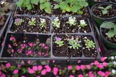 Fleurs et plantes dans des plateaux de graine Images stock