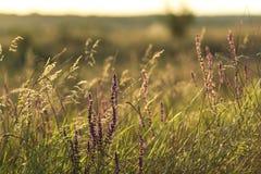 Fleurs et plantes sages Images stock