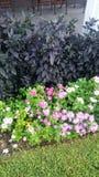 Fleurs et poivrons ornementaux Photos stock