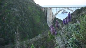 Fleurs et pont pourpres de Bixby avec la gauche de l'espace de copie clips vidéos