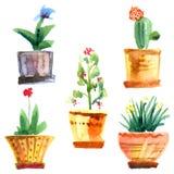 Fleurs et pots Images stock
