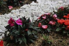 Fleurs et roches Photographie stock libre de droits