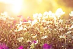 fleurs et soleil, photographie stock