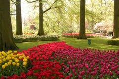 Fleurs et source Photo stock