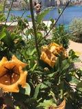 Fleurs et statue oranges de chat Photos stock