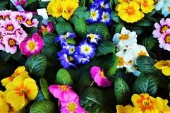 Fleurs et tendresse Image libre de droits
