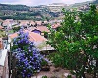 Fleurs et toits Image stock