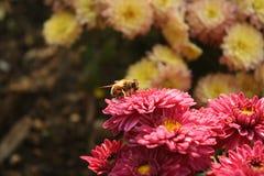 Fleurs et une abeille Photos stock