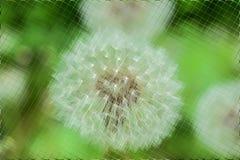 Fleurs et verts dans le modèle de tuiles Photographie stock