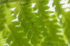 Fleurs et verts dans le modèle de tuiles Photographie stock libre de droits