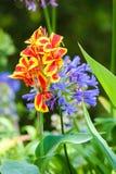 Fleurs exotiques au palais de Monserrate dans Sintra image stock