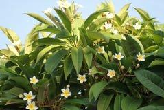 fleurs exotiques en Chypre Images libres de droits
