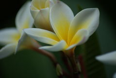 fleurs exotiques en Chypre Images stock