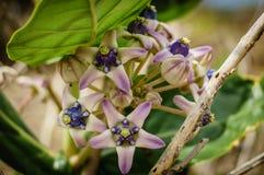 Fleurs exotiques pourprées Image stock