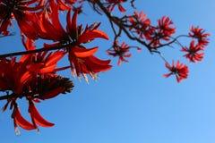 Fleurs exotiques rouges contre le ciel bleu images libres de droits