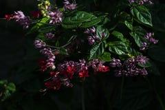 fleurs exotiques tropicales Papier peint noir de texture photo stock