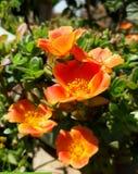 Fleurs fabuleuses Images stock
