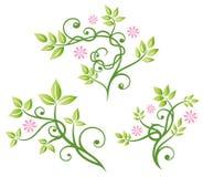 Fleurs, feuilles, ensemble de vecteur Image libre de droits