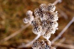Fleurs figées Photographie stock libre de droits