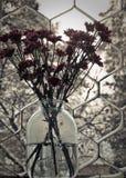 Fleurs figées Photo libre de droits