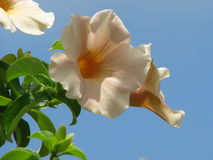 Fleurs, fleur, nature images stock