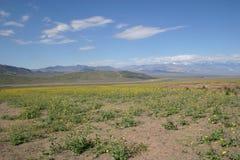 Fleurs fleurissant dans Death Valley Photo libre de droits