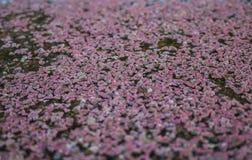 Fleurs flottant sur un lit de l'eau Photos libres de droits