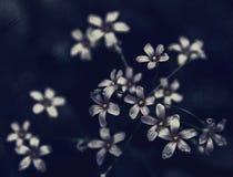 Fleurs foncées Photo stock