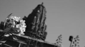 Fleurs - fort de Kumbhalgarh Photos libres de droits