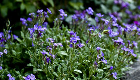 Fleurs fraîches Photographie stock libre de droits