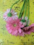 Fleurs fraîches Photo stock
