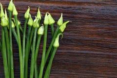 Fleurs fraîches d'échalote Photographie stock libre de droits
