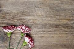 Fleurs fraîches d'oeillet sur le fond en bois image stock