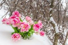 Fleurs fraîches dans la neige Image libre de droits