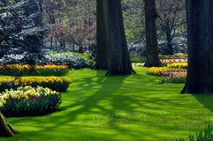 Fleurs fraîches dans le jardin Images stock