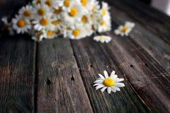 Fleurs fraîches de camomille sur la table en bois Images libres de droits