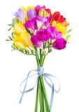 Fleurs fraîches de freesia photographie stock libre de droits