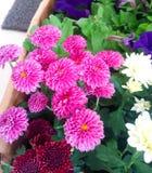 Fleurs fraîches de jardin de jardin Photos stock