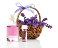 Fleurs fraîches de lavande avec l'essence de lavande naturelle Photographie stock
