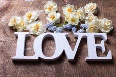 Fleurs fraîches de narcisse et de muscaries de jaune de ressort et en bois Photos stock