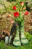 Fleurs fraîches de tulipes de ressort dans le vase à bottes Image libre de droits