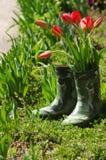 Fleurs fraîches de tulipes de ressort dans le vase à bottes Photos libres de droits