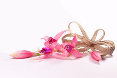 Fleurs fuchsia avec un arc Image stock