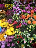 Fleurs funèbres Photo libre de droits