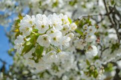 Fleurs gaies Image libre de droits